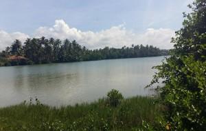 eLanka | Kosgoda Sri Lanka Beach Lagoon frontage land for SALE