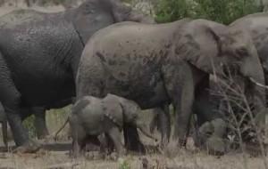 Human Elephant Conflict-Sri Lanka – by Oscar E V Fernando